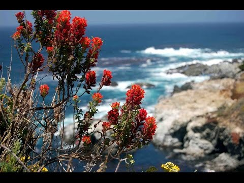 "Peaceful Music, Relaxing Music, Instrumental Music, ""Big Sur"" by Tim Janis"