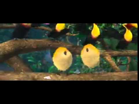 Birds dance with Hindi song