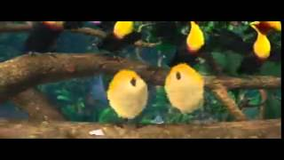 funny birds singing