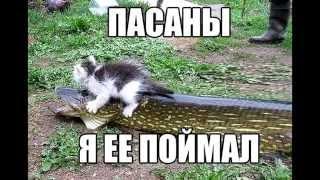 Смешные кошки 3