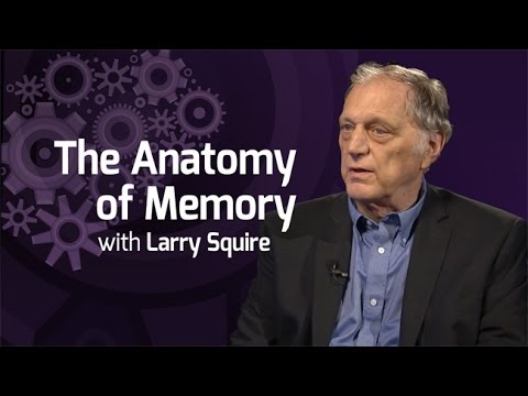 The Anatomy of Memory - On Our Mind
