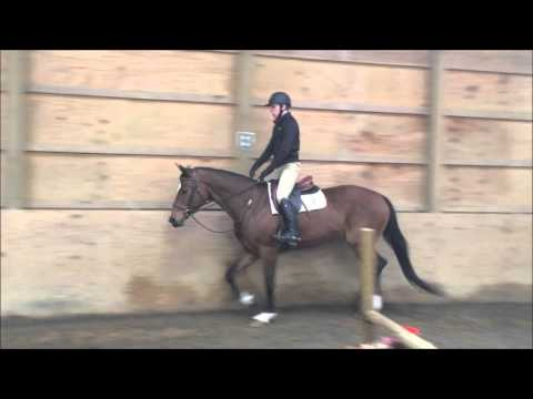 Blue Ivy-  2007 Imported Westphalian Mare For Sale