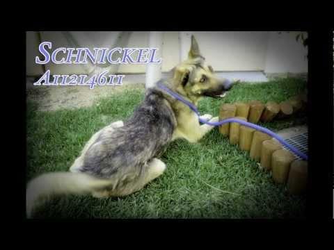 Schnickel A1214611 - Bound Angels Shelter Angel VIdeo