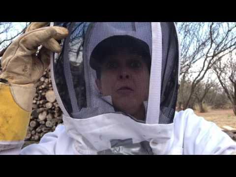 Nice Killer Hive...