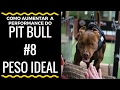 Como aumentar a performance do PIT BULL - #8 Peso ideal