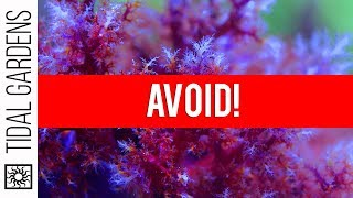 The Top 5 Corals to AVOID