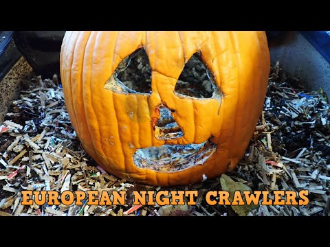 European Night Crawlers | Urban Worm Bag 12-17-19