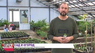 Выращивание рассады: делаем удобные контейнеры из спанбонда! Иван Русских. Сад и огород