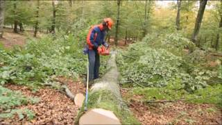 How to work with chainsaws - Limbing