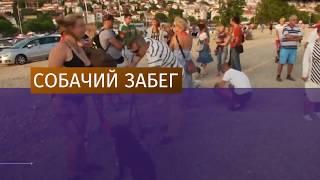 В Хорватии состоялись соревнования для собак и их хозяев