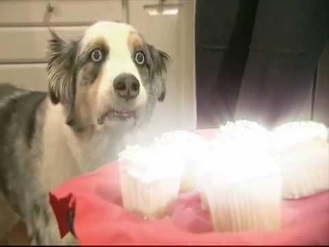 dramatic-cupcake-dog---revelation