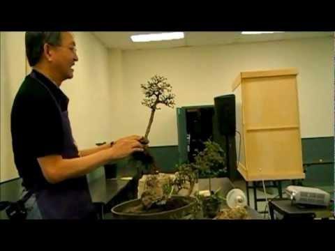 Bonsai Artisan Ken Teh-  Making a Saikei, Chinese Elms