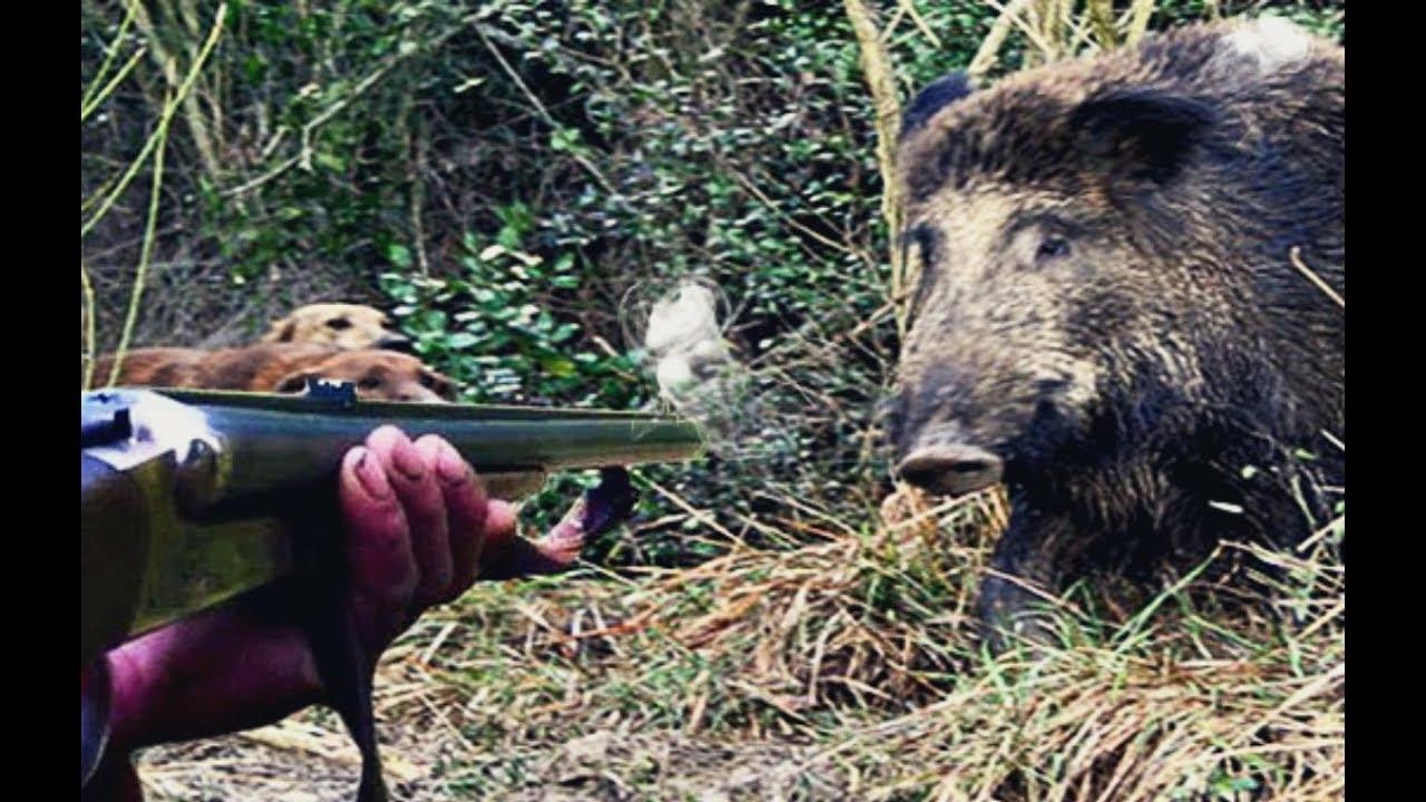 Как охотиться на кабана летом?