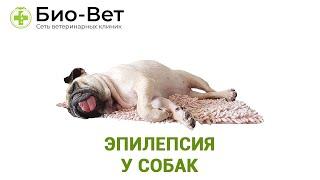 Эпилепсия у собак. Ветеринарная клиника Био-Вет.