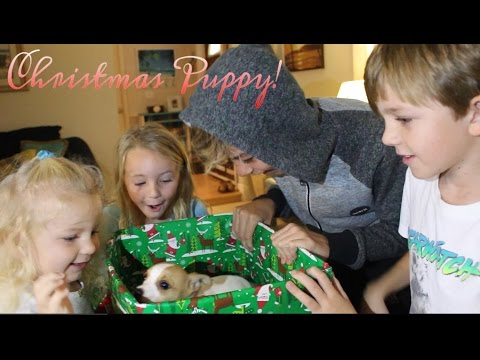 Christmas Puppy Surprise - Kids Unbox Our New Puppy - 'River' The Early Christmas Gift !