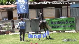 Repeat youtube video Arabesco  Campeonatos de Yeguas y Sementales