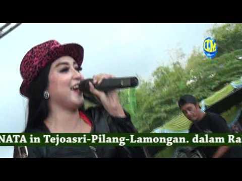 Kimcil kepolen - monata - live pilang 2016