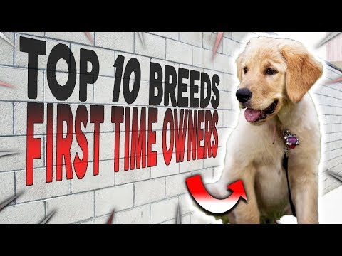 TOP 10 BEST DOG BREEDS FOR FIRST TIME OWNERS
