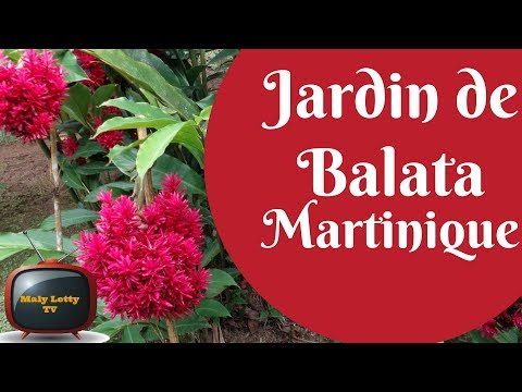 Voyage Antilles french west indies Martinique #3 Jardin de balata Travel diary