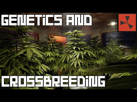 Rust – Comprehensive Genetics and Crossbreeding Guide – The Path to Perfect Genetics