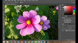 photoshop改變局部顏色;花瓣顏色