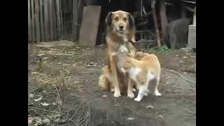 Собака и Кот! Дружба на века!