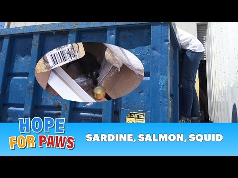 Hope For Paws going dumpster diving to save kittens thrown like trash.