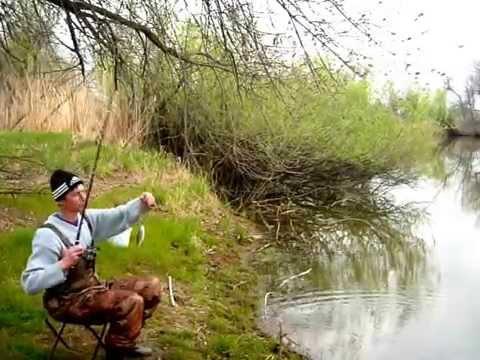 ловля воблы в апреле