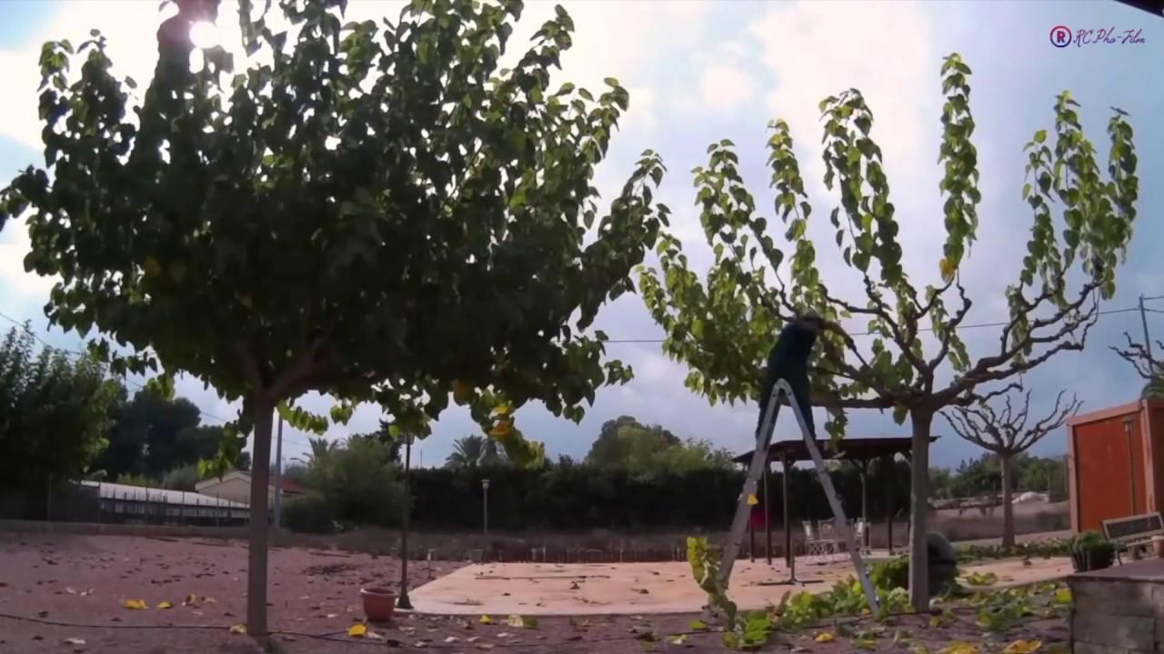 Time lapse poda morera 2 youtube - Poda de hortensias epoca ...