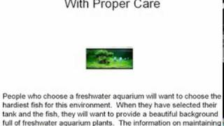 Freshwater Aquarium Plants Beautify The Background