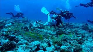 Scuba Diving in PALAU (팔라우 스쿠버다이빙(M) 2014)