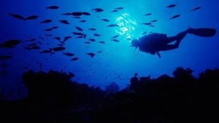 El reino de la oscuridad y la penumbra (Zona abisal del oceano)