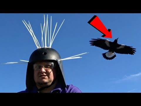 DazzaJay Builds: Magpie Defender Helmet