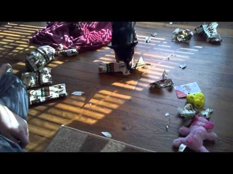 Jake's (Chihuahua) Christmas 2013
