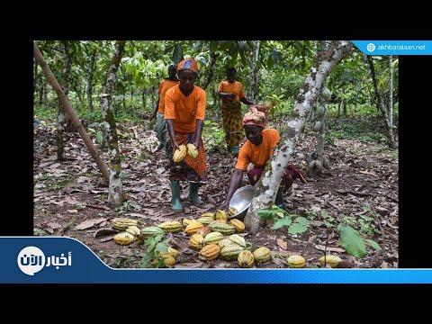 ساحل العاج أكبر منتج عالمي للكاكاو تخوض غمار التجارة المنصفة  - نشر قبل 4 ساعة