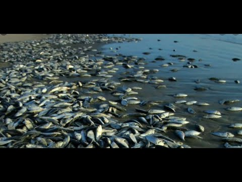 Dead fishes and dolphins washed ashore in Ghana