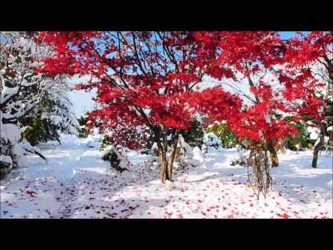 紅葉に雪が被る姿がみられるかも?