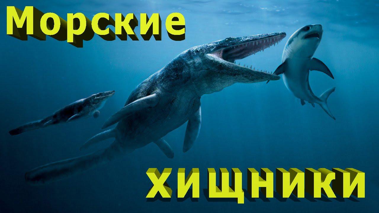 Самые опасные морские хищники Интересные факты