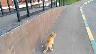 Кот говорит я тебя убью. Драка котов.