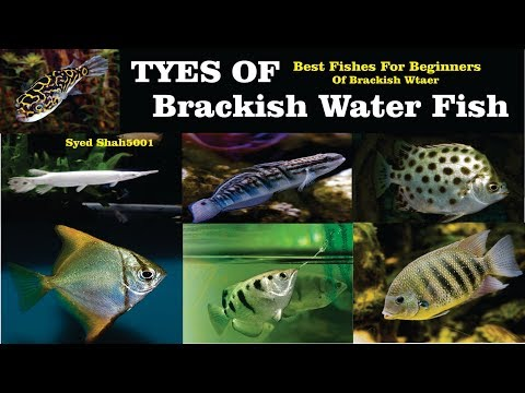 Types Of Brackish Water Fish #All About Brackish Water Fish