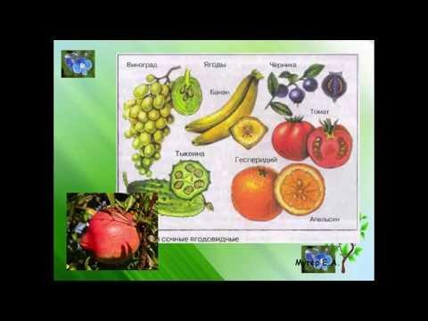 Как приготовить чай из листьев садовых и дикорастущих растений
