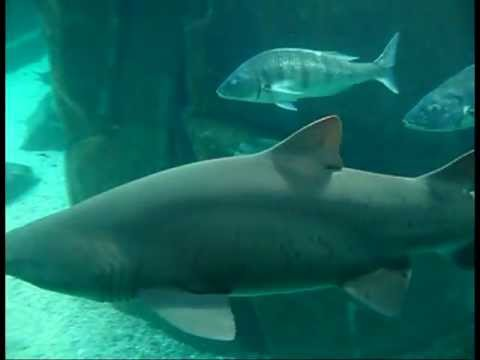 South Africa - Two Ocean Sea Life - Travel  Video
