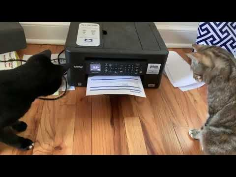 Two Curious Cats Scared of Printer - 1049615
