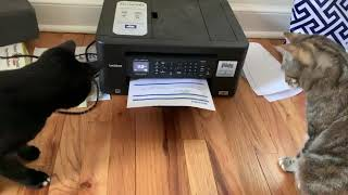 Two Curious Cats Scared of Printer 1049615