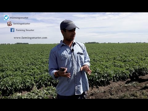 Variable rate irrigation on potatoes
