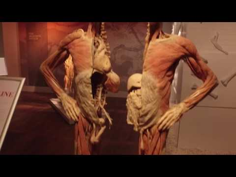 Real Bodies in the Ambassador Theatre