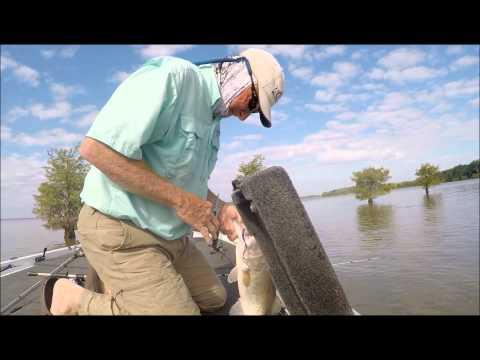 Lake marion bass fishing youtube for Lake marion fishing report