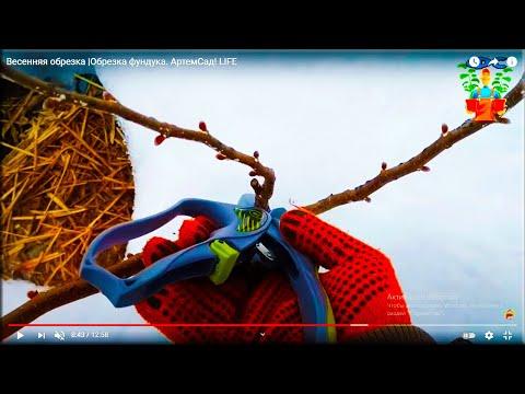 Весенняя обрезка | Фундук сад | Обрезка фундука