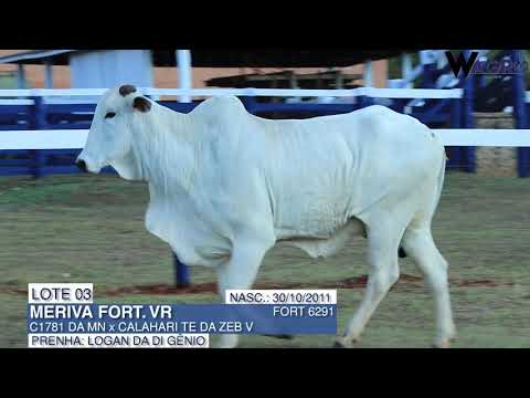 LOTE 03   FORT 6291