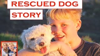 National Pet Day ~ Adopt / Rescued Dog Story | Theekholms